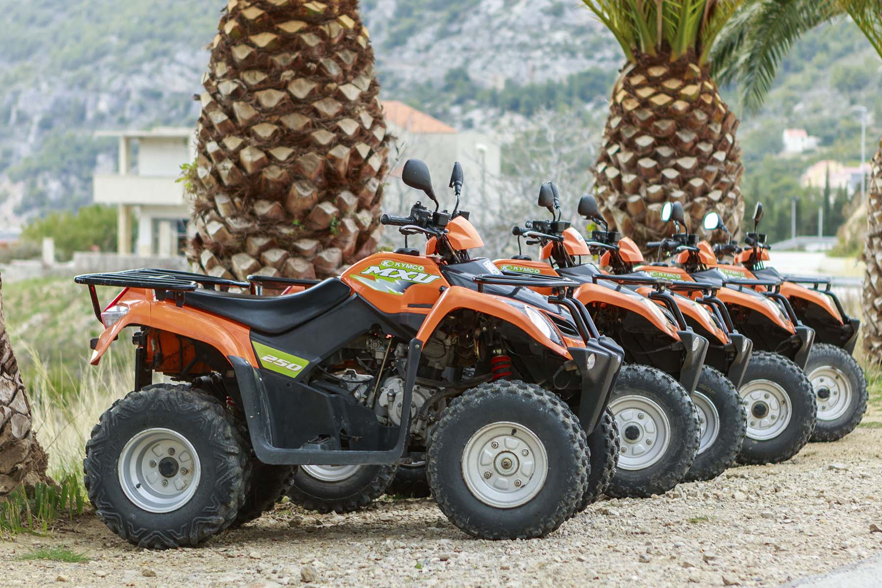 Safari quads