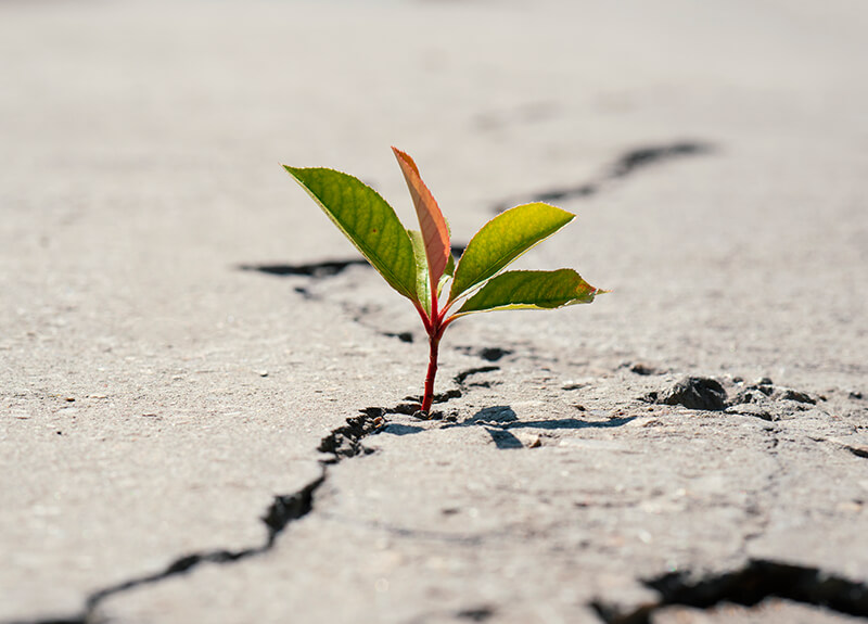 A small four-leaf plant sprouting from a crack in a piece of concrete.