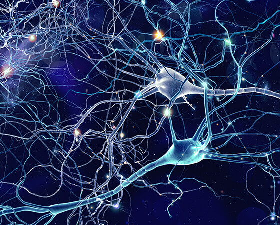 Image of representative brain synapses.
