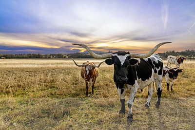 Opportunities for agricultural technology in Texas