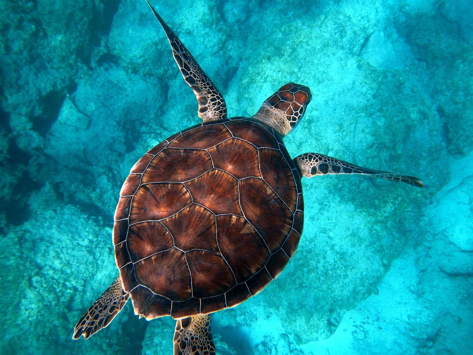 At snorkle med skildpadder / Unsplash