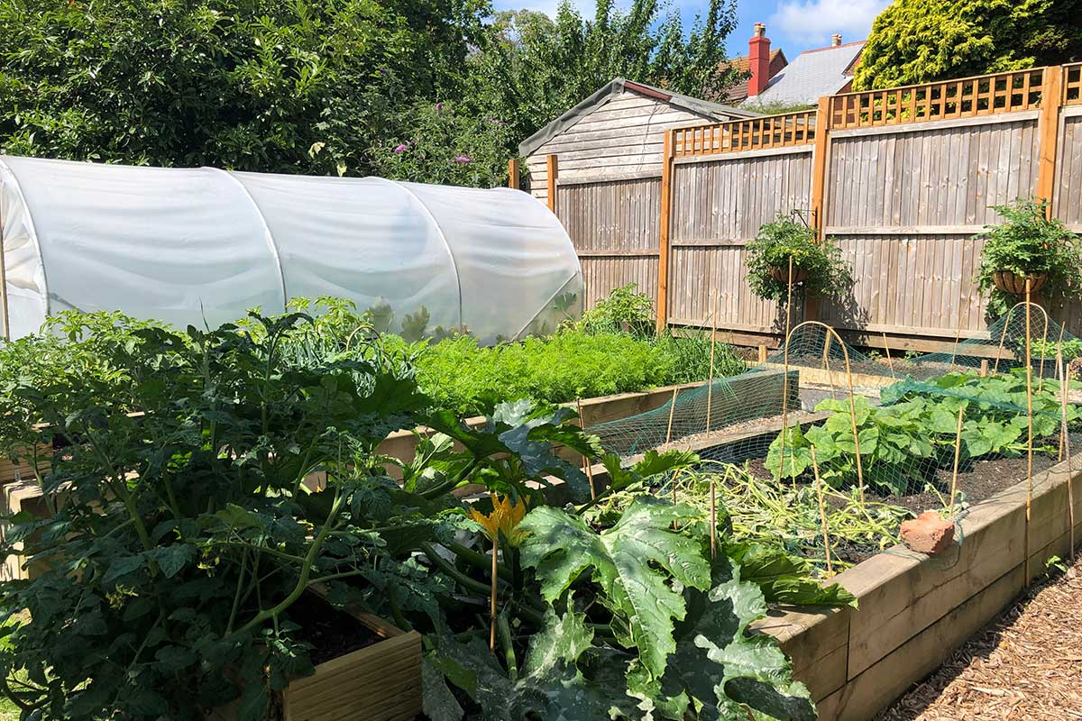 photo of a vegetable plot in the garden