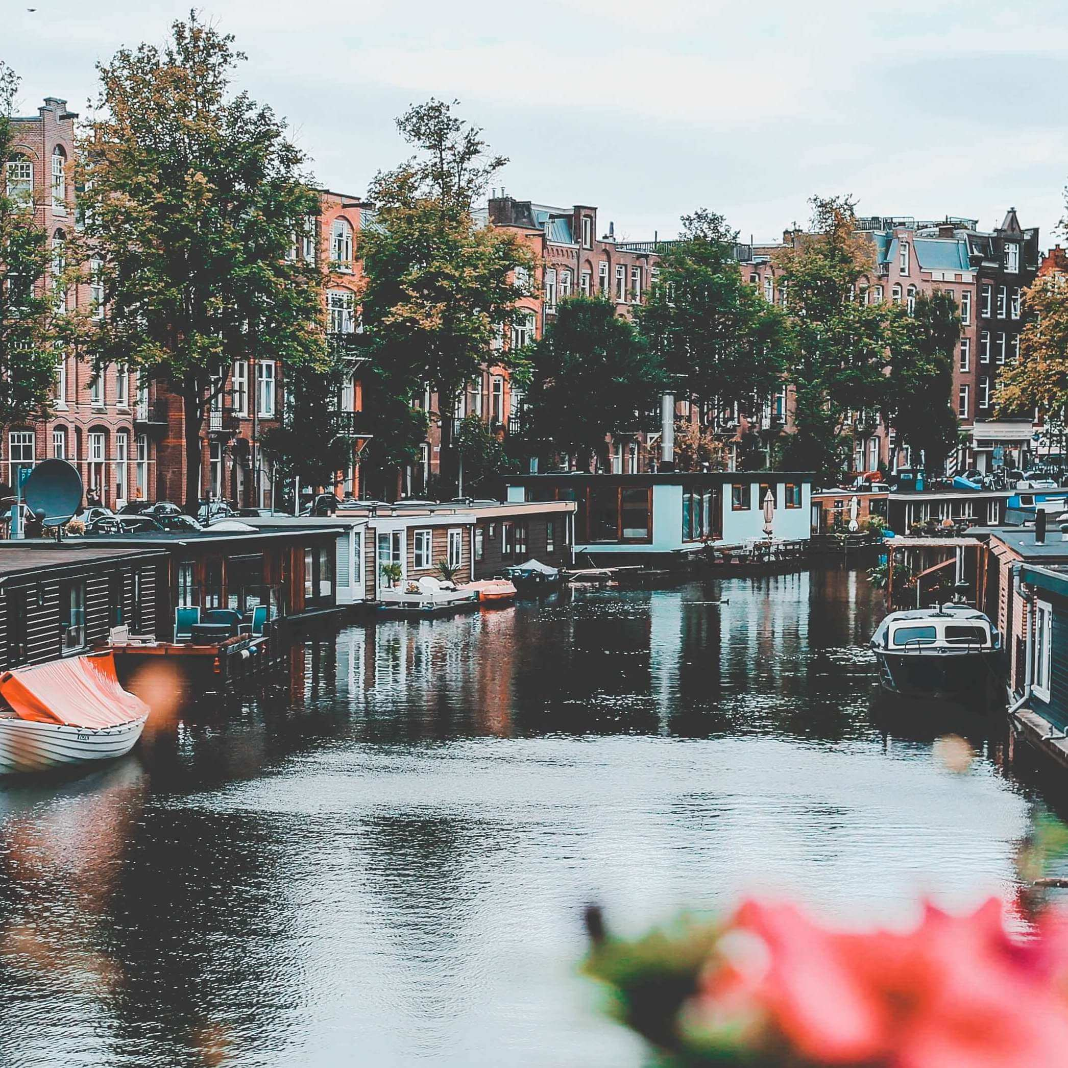 80+ Dutch Words for Learning about Dutch Culture