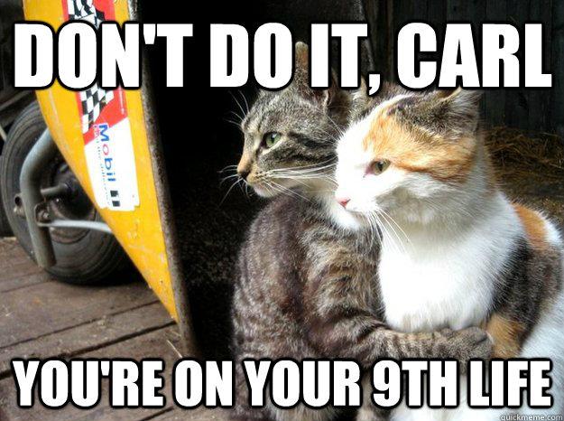 Dont-do-it-kitty.jpg