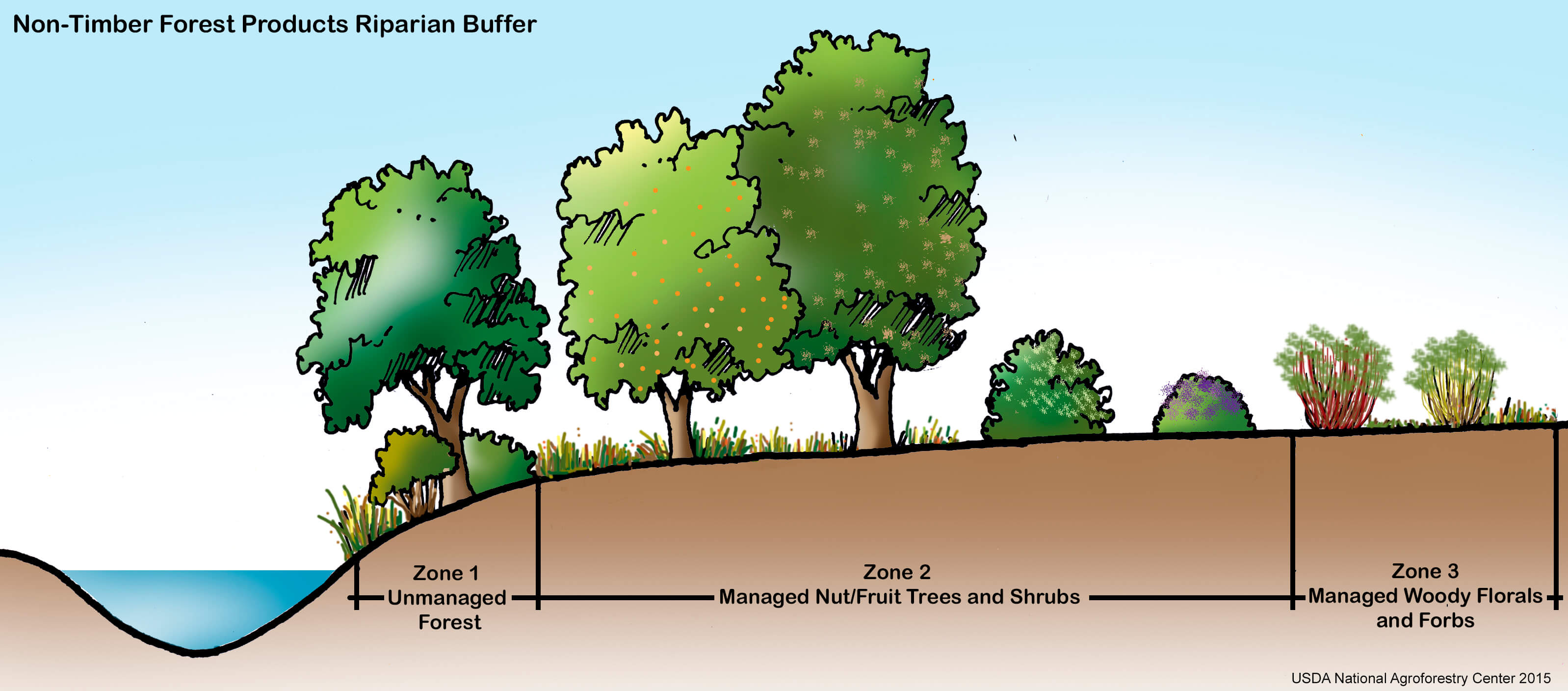 Riparian Buffer NatureWorksPark