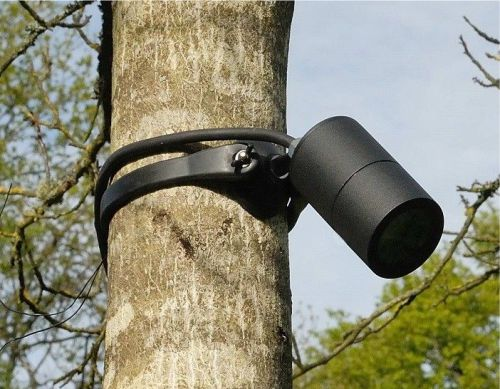 Gambar lampu sorot khusus pohon