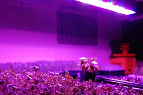 Gambar lampu UV untuk tanaman