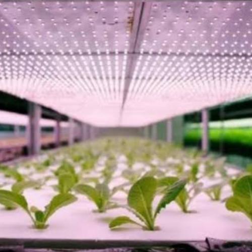 Lampu UV untuk tanaman