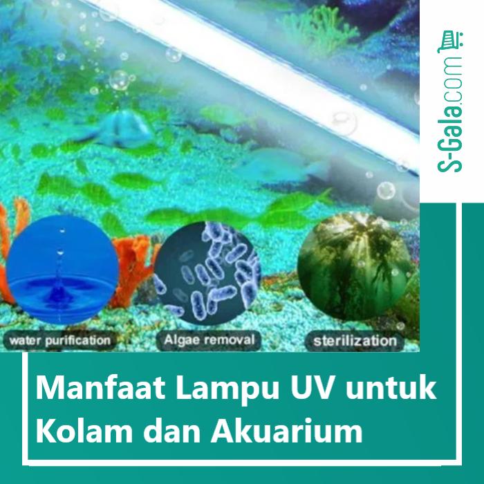 Lampu UV untuk kolam