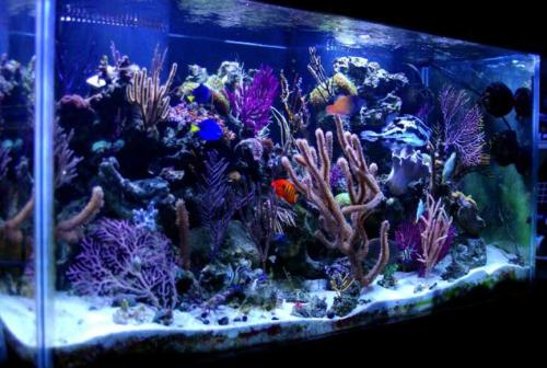 Gambar Akuarium dengan lampu UV