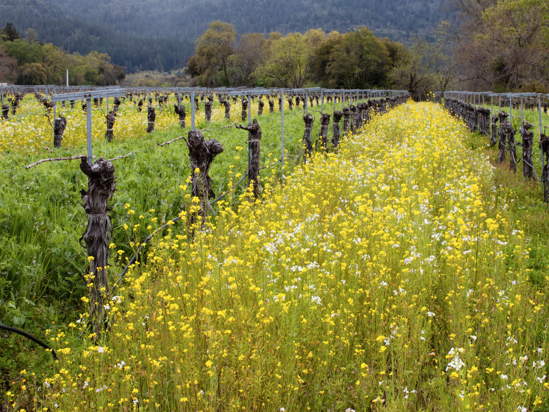 Lamb Vineyard