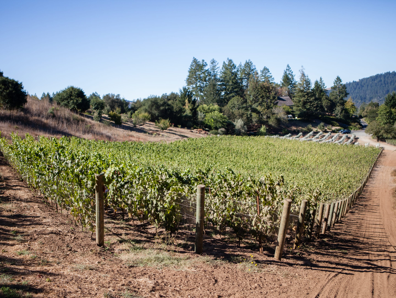 Whitney's Vineyard