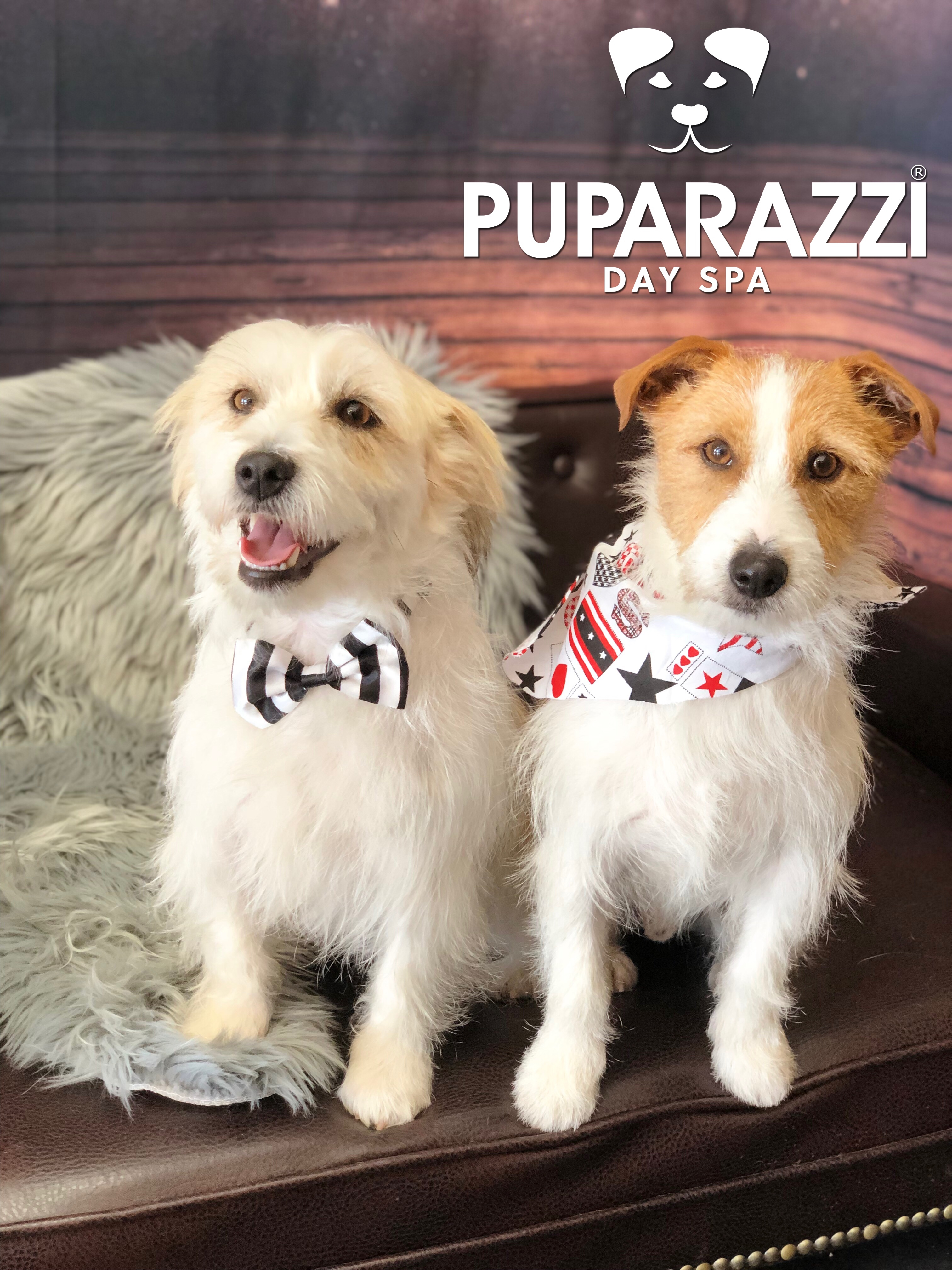 A big Happy Birthday to Max & Neville at Puparazzi Day Spa