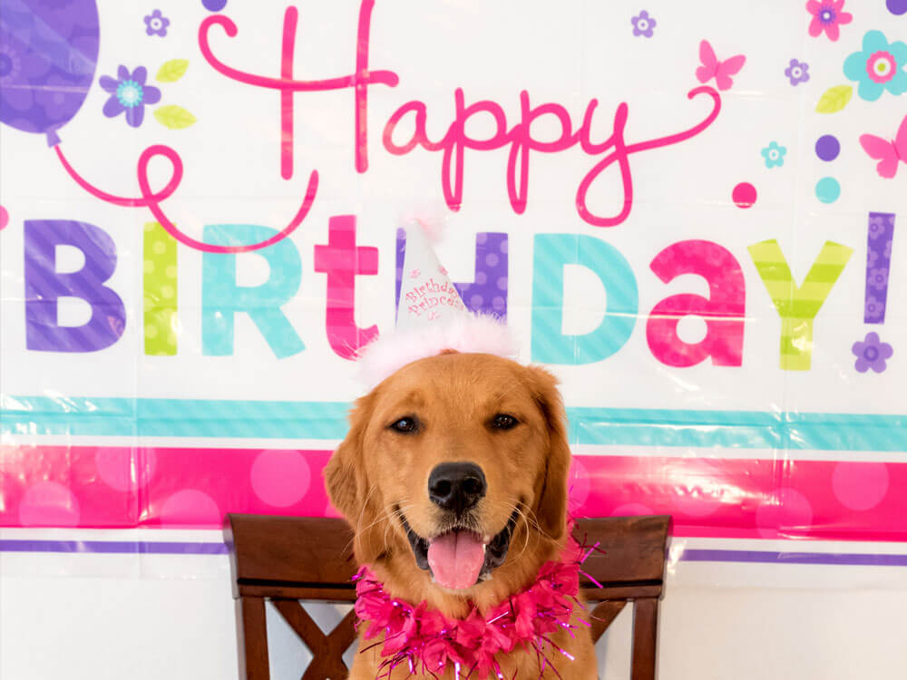 Birthdays at Puparazzi Day Spa