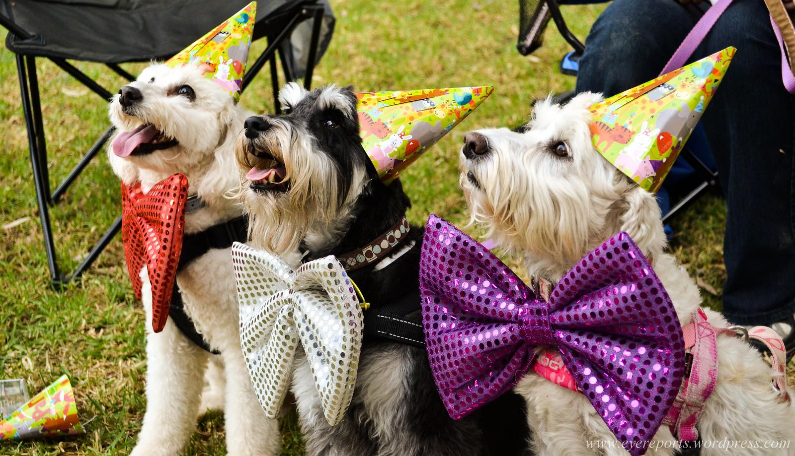Birthdays at Puparazzi Day Spa