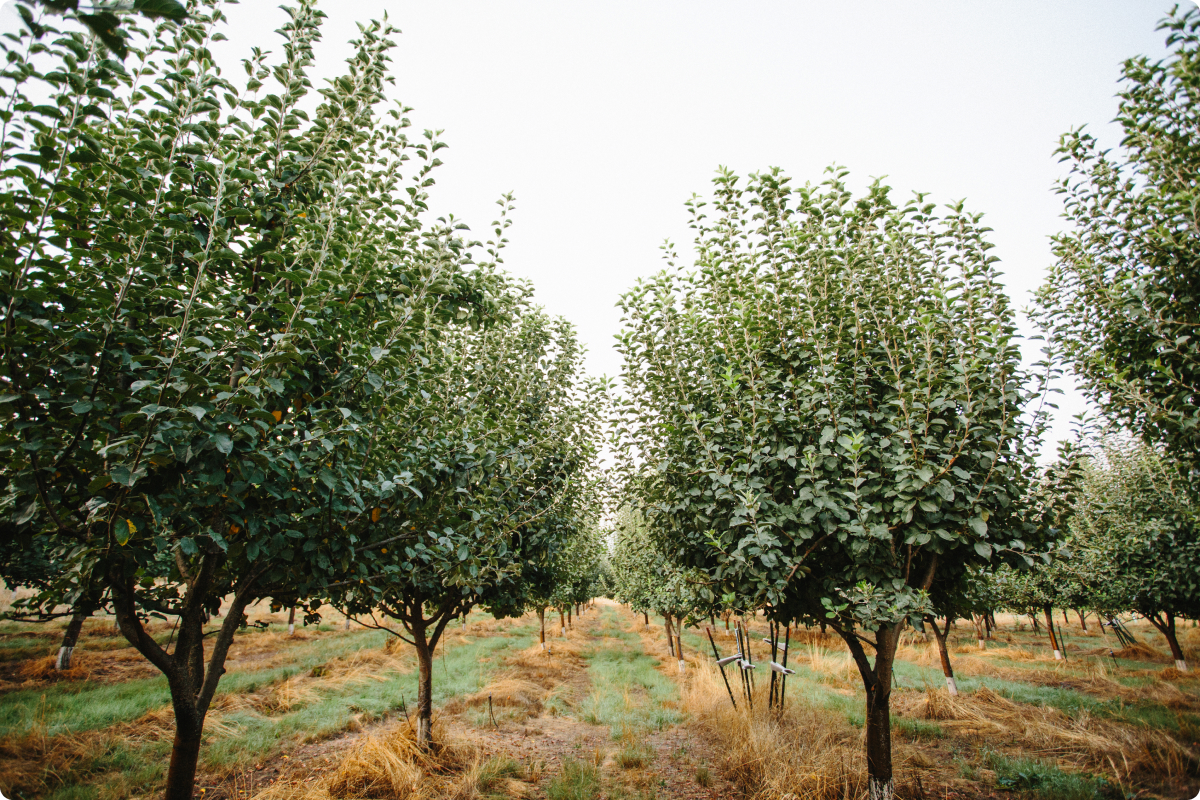 About JOHNNY APPLESEED Orchards, LLC