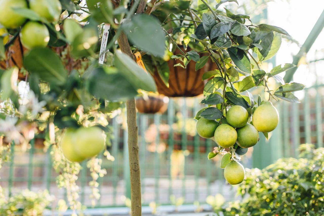 Johnny Appleseed Farm