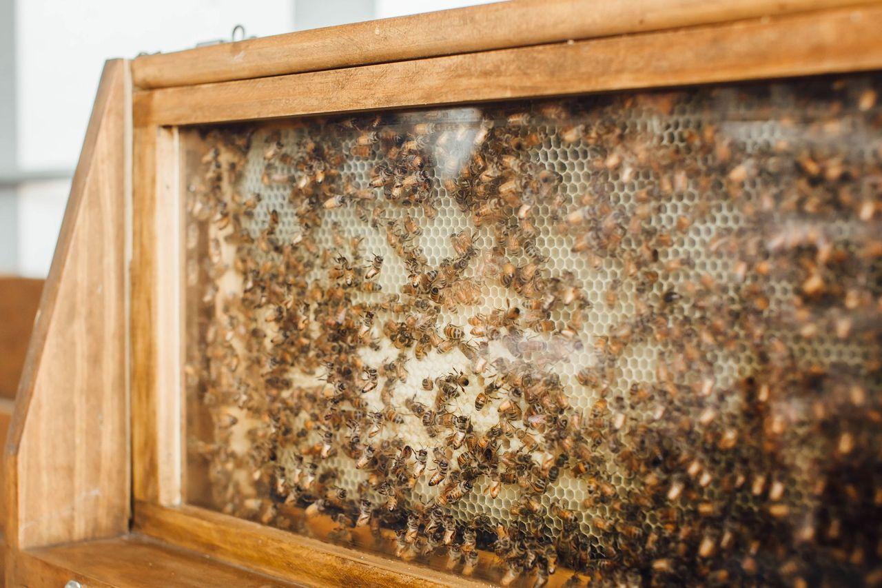 Johnny Appleseed Organic Honey