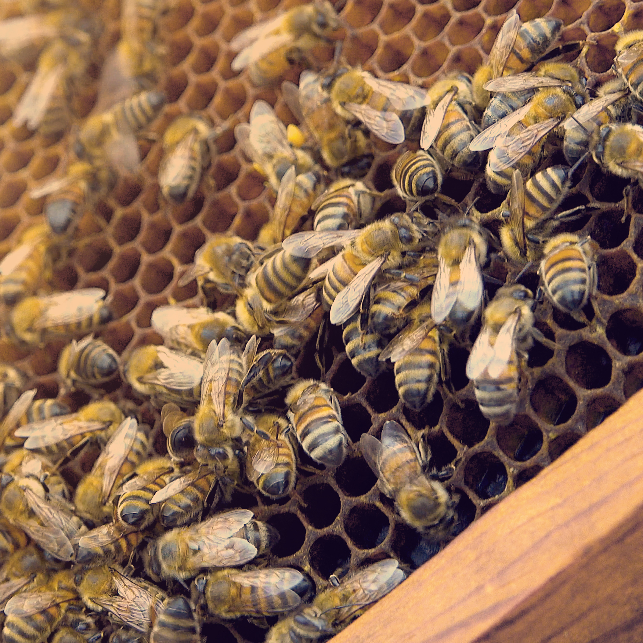 How to move bees into hives