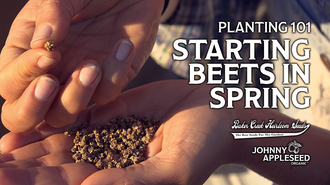 Baker Creek Heirloom Seeds horticulturist Shannie McCabe joins Charles Goodin at the Johnny Appleseed Organic Village to discuss container planting beets in spring.