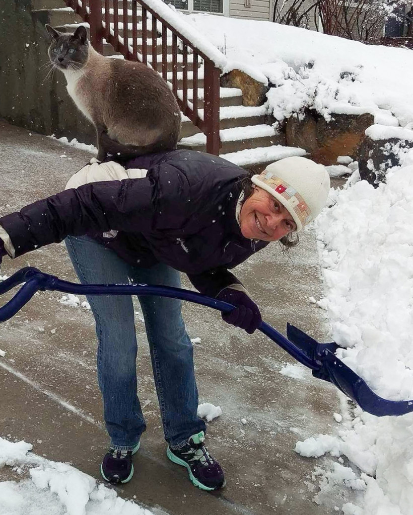 Katherine Aeby's cat, Sprout, supervising her shoveling snow after a storm. | Katherine Aeby