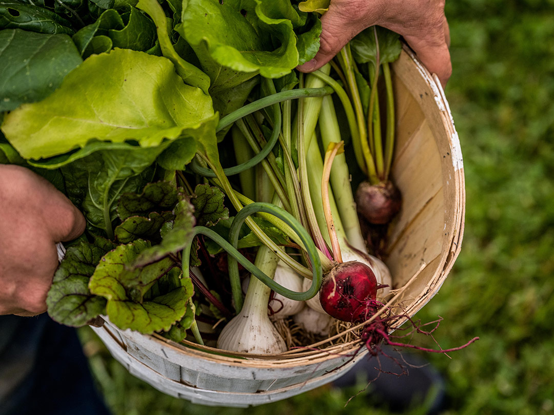 Chef Sean Brock holds a basket filled with farm-fresh produce from Bloomsbury Farm, Nashville.