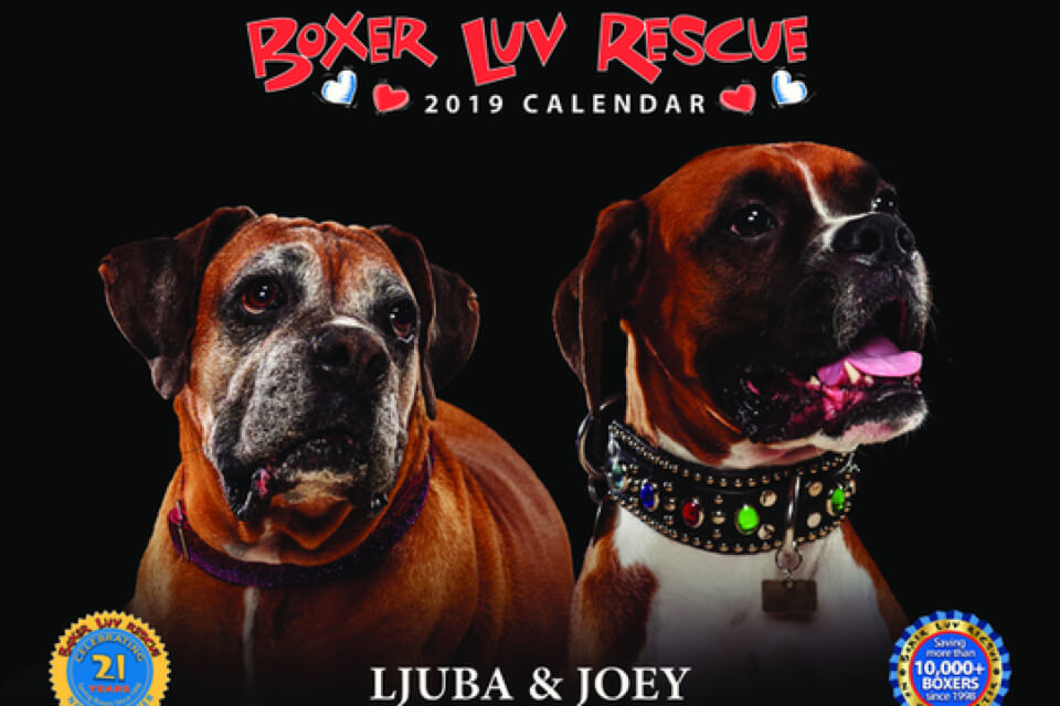 Boxer Luv Rescue Phoenix Az Helping Homeless Dogs