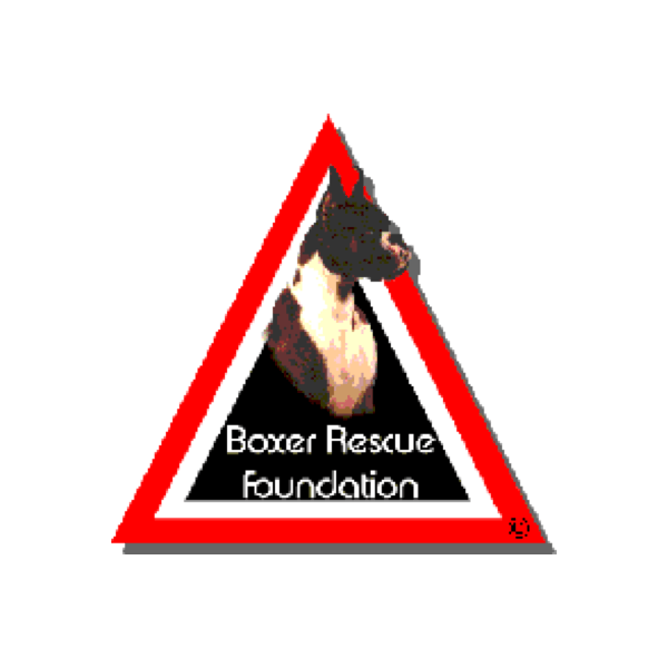 Boxer Luv Rescue, Phoenix AZ: Helping homeless dogs