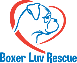 Boxer Luv Rescue