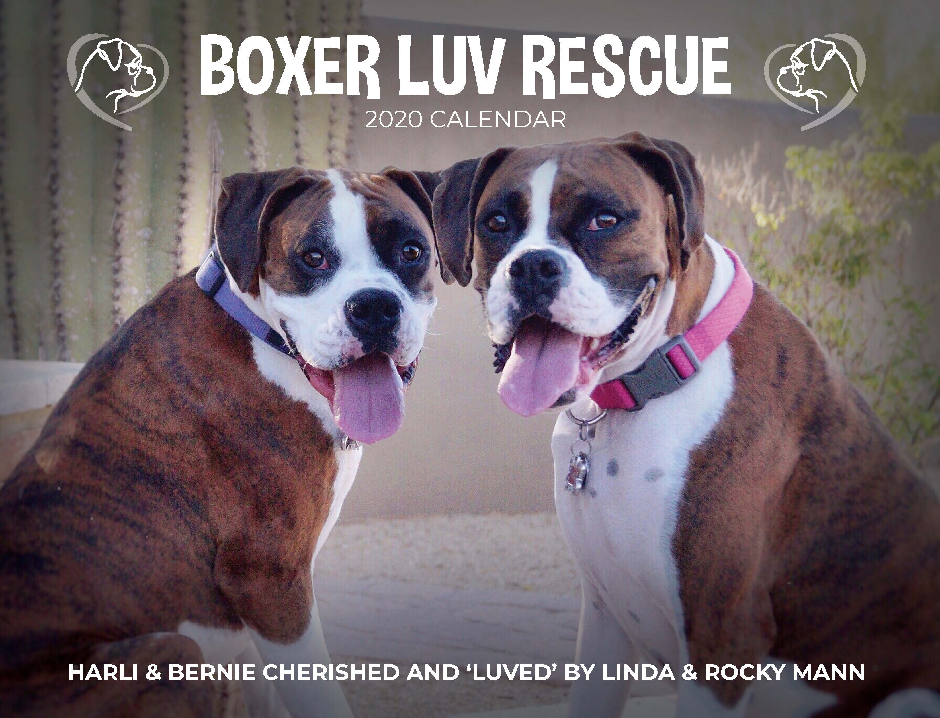 Boxer Luv Rescue annual calendar