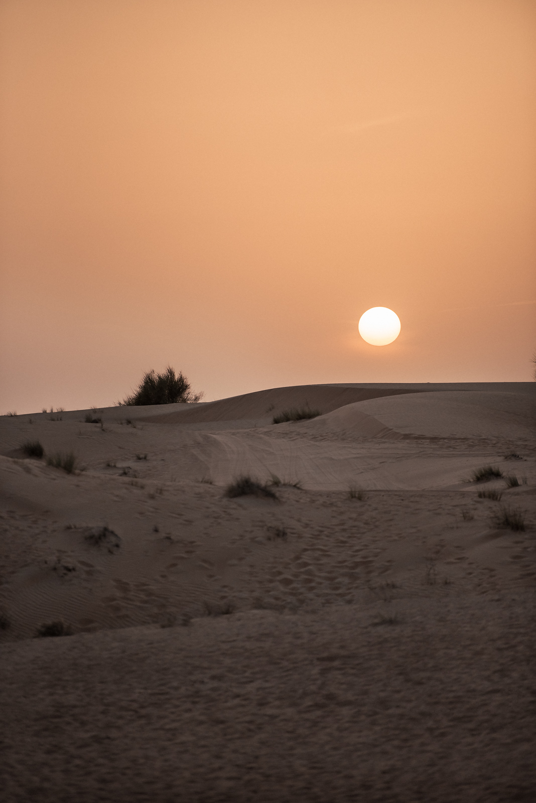 36 Hours In Dubai Desert Safari