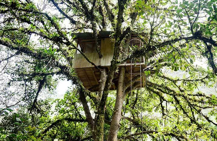 treehouse high in a tree