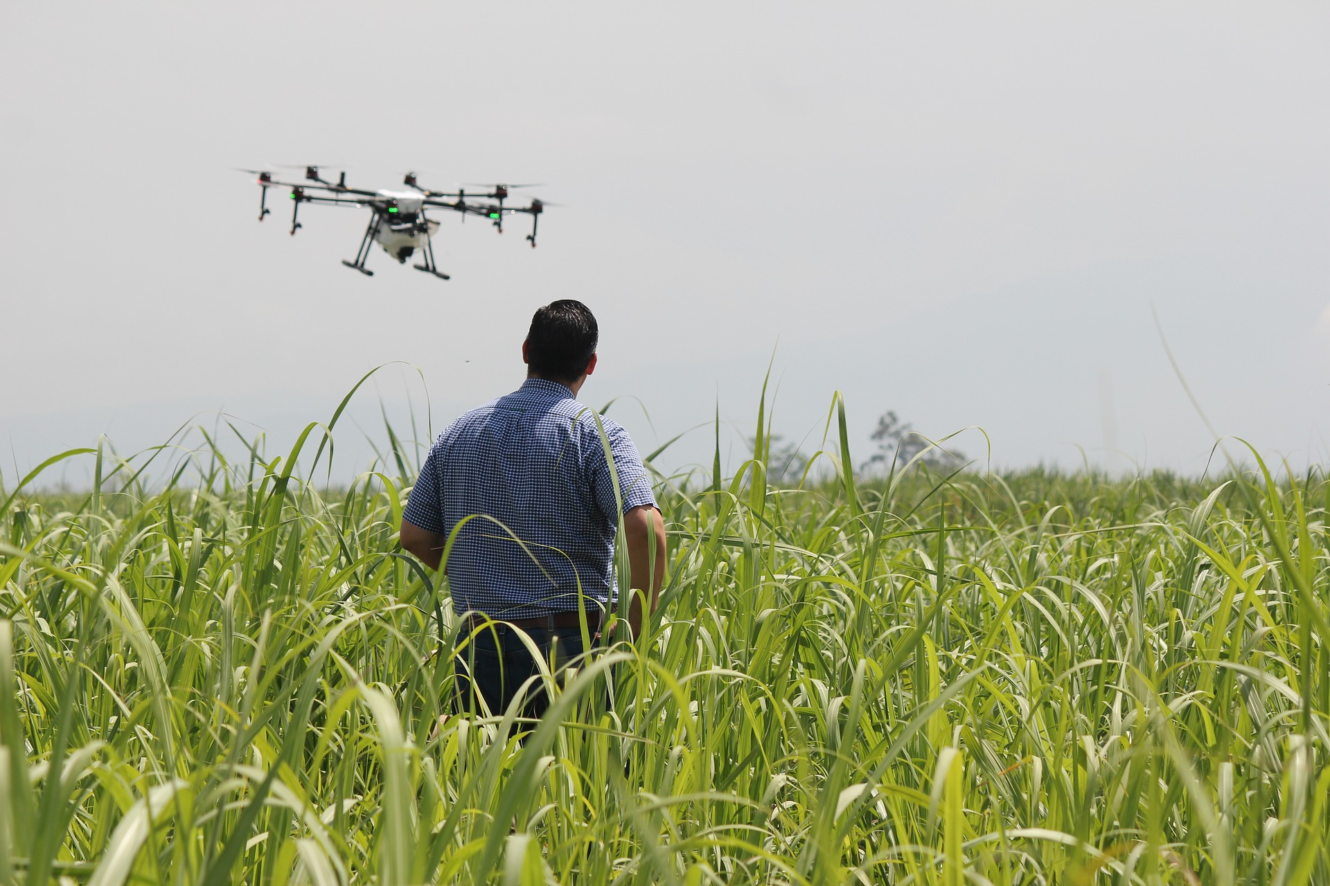 The concept of precision agriculture has been introduced with the need for sustainable development in the agricultural sector.