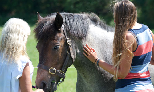 One-to-one equine assisted coaching and counselling sessions