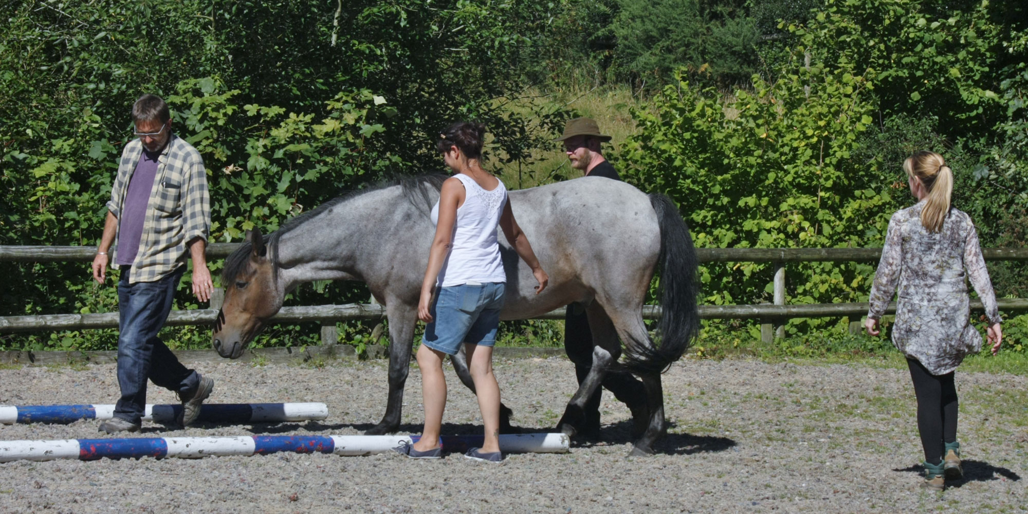 Awareness with Horses