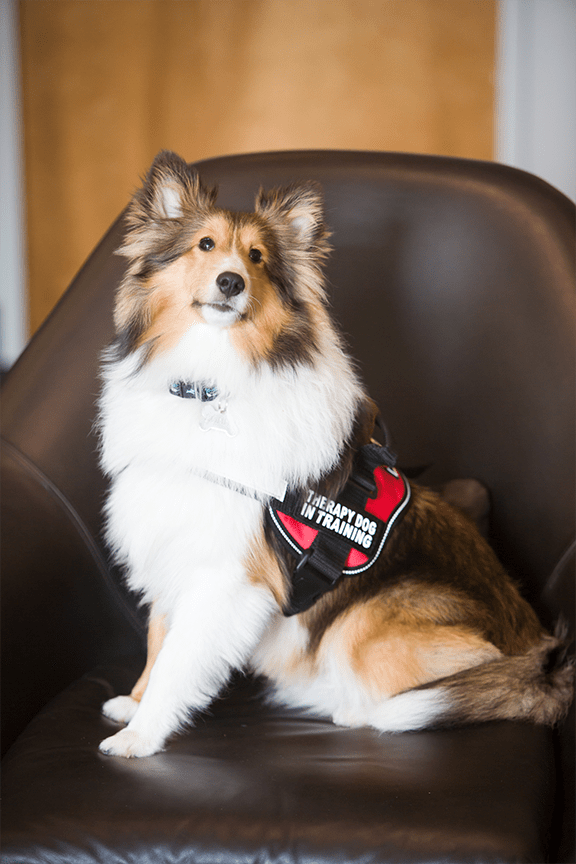 Meet Sonny, CT-ENT's Therapy Dog