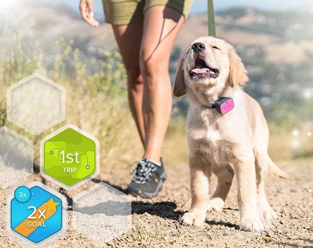 Whistle GO & GO Explore GPS Pet Trackers