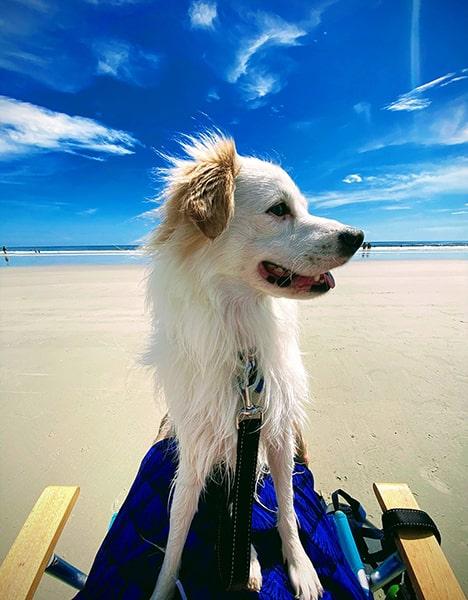 Jax also enjoys the beach.