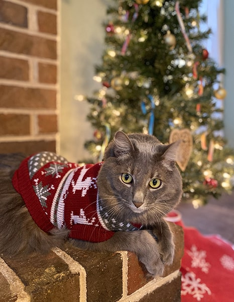 Ezra had mixed feelings about wearing this sweater.