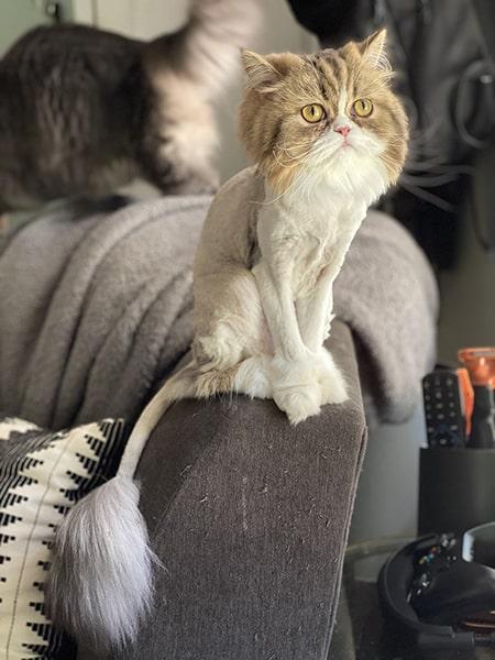 The fur-less wonder after her lion cut.