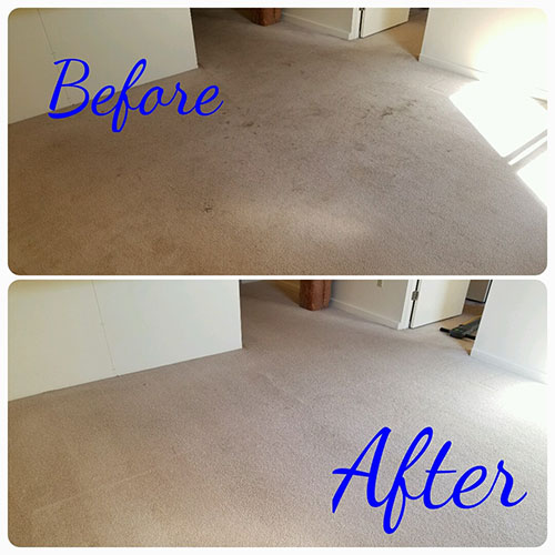 carpet cleaning before and after project