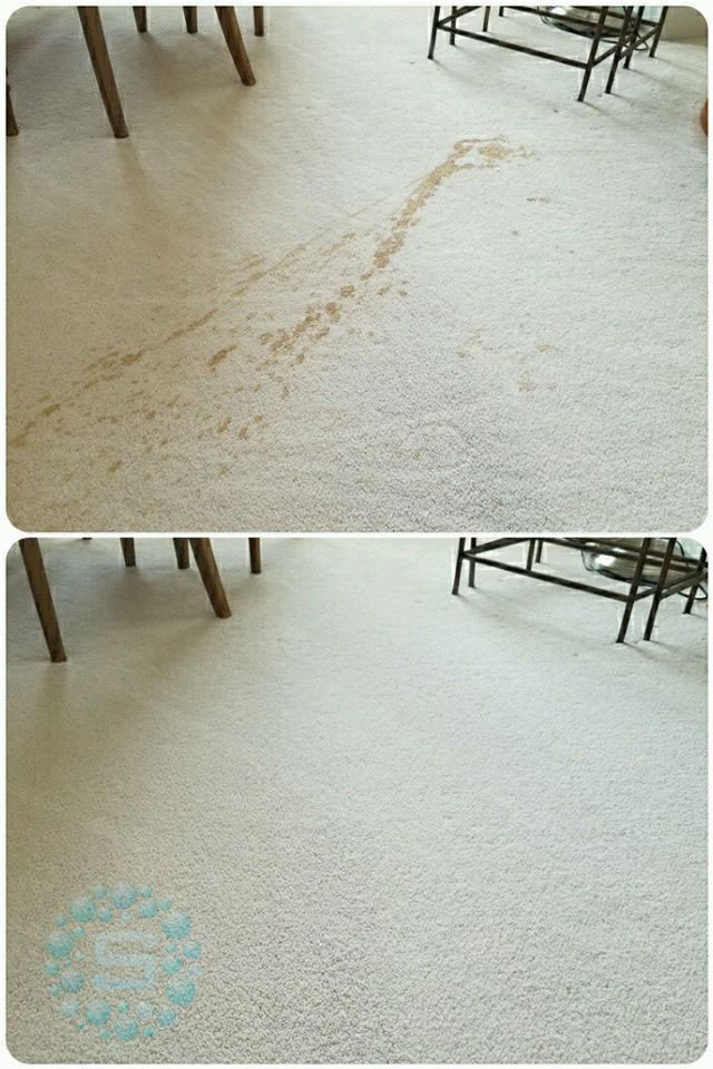 residential carpet cleaning expert project