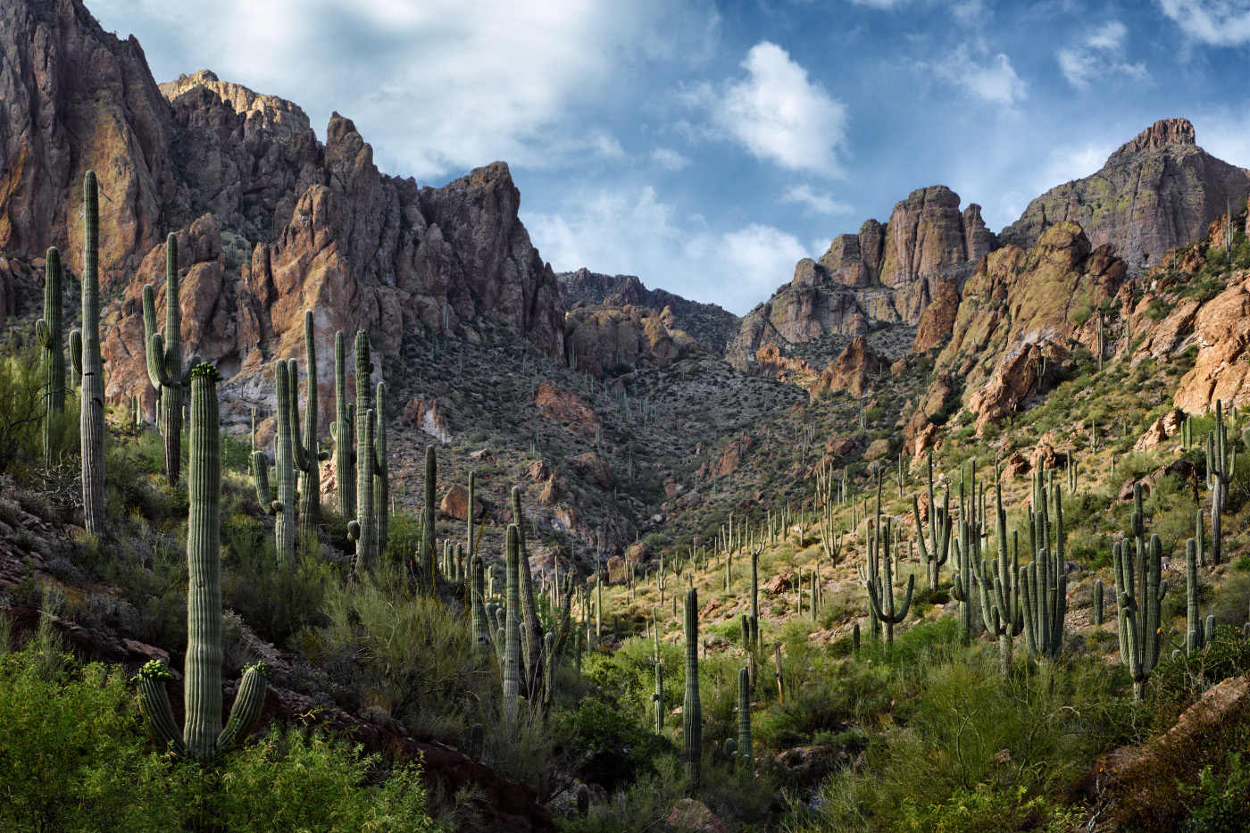 Sublime Light, Tonto National Forest, Arizona