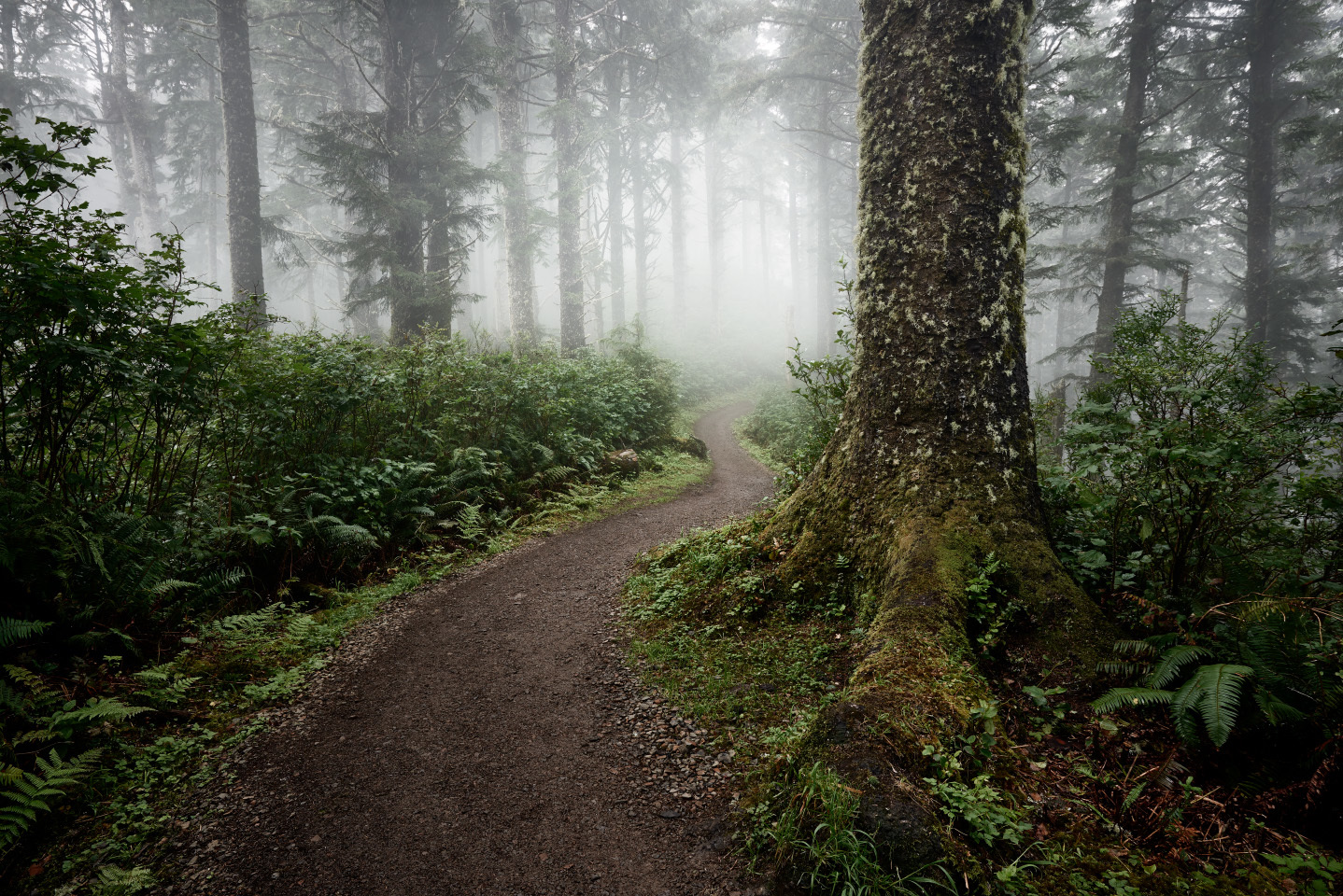 Old Growth Forest Trail, Coastal Oregon
