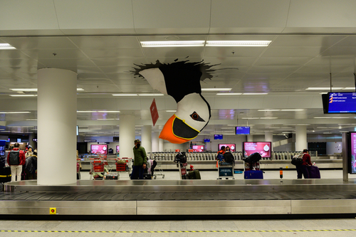 Keflavik airport Iceland - Big puffin bird in arrival hall of airport. Puffin is one of the symbols of Iceland
