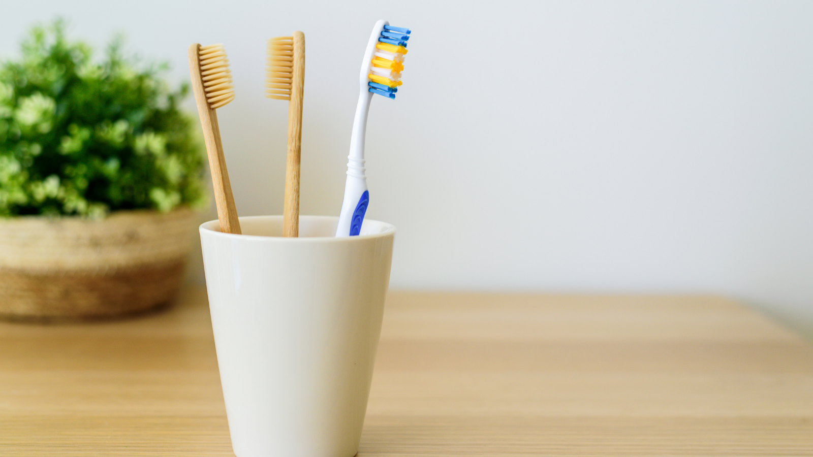 closeup of toothbrushes