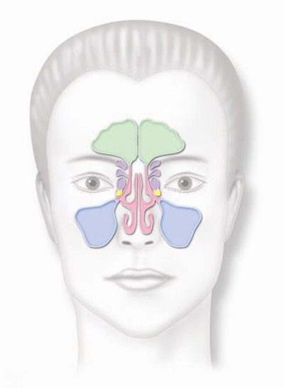 Front  Woman Sinuses.jpg