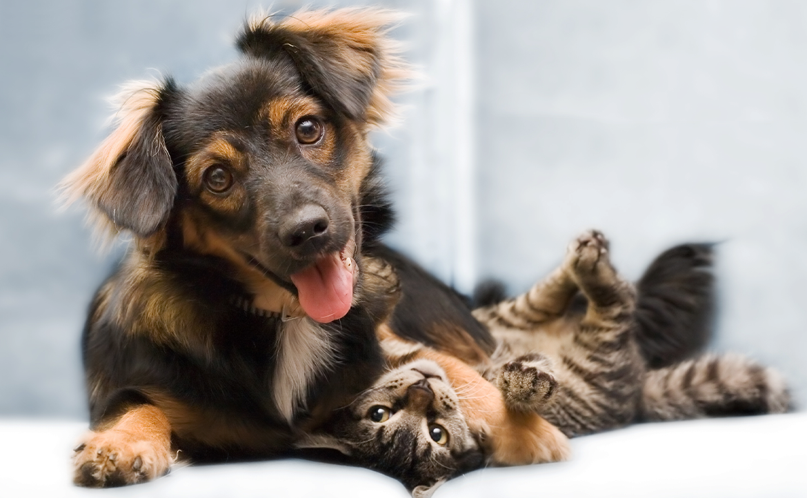 Fall Allergies and Your Dog or Cat