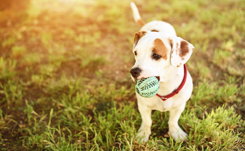 Choosing the Best Dog Toys