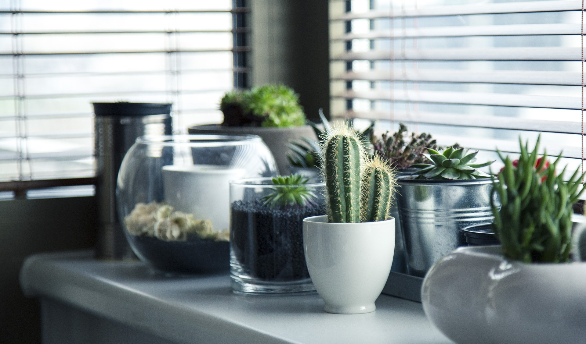 Assortment of potted plants on a shelf